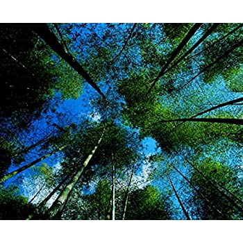 Peel and Stick Non-woven Fabric for Wall Murals Adhesive Wallpaper Bamboo and Forest #hq04-002, 5.6ft x 4.4ft coupon codes 2015
