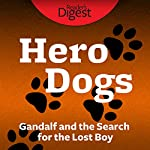 Gandalf and the Search for the Lost Boy | Christopher W. Davis