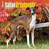 Italian Greyhounds Calendar (Multilingual Edition)