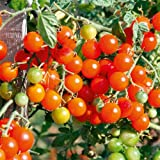 Suttons Seeds 150515 Sweetbaby Tomato Seed