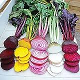 """600 Seeds 9g Beetroot """"Rainbow Blend"""" (Beta vulgaris) Seeds By Seed Needs"""
