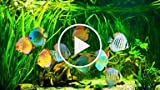 How to Set Up a Saltwater Fish Tank