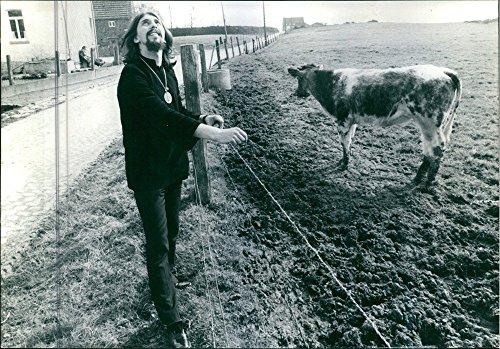 Vintage Photo de l'homme debout avec une vache dans un sol, regardant vers ciel et souriant.