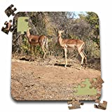 Angelique Cajams Safari Animals - Kruger Impalas passing - 10x10 Inch Puzzle (pzl_26843_2)