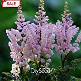 New Arrival!Multi-species Multi-Color Astilbe Seeds Perennial Flowering Plants Potted Seeds Beautiful 100 Pcs/...