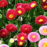 Pepper Agro Mix Daisy Double Seeds