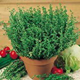 Suttons Seeds 150460 Thyme Common Herb Seed