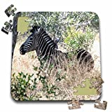 Angelique Cajam Safari Animals - South African Zebra in the grass - 10x10 Inch Puzzle (pzl_20131_2)