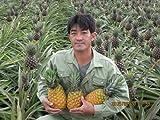 當銘敏秀さんのパイナップル「沖縄県石垣島産てぃーだパイン(ゴールデン)」 ランキングお取り寄せ