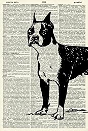 Boston Terrier ART PRINT - VINTAGE ART PRINT - Dog Art Print - Wall Art - Illustration - Pet Picture - Vintage Dictionary Art Print - Wall Hanging - Home Décor - Housewares - Book Print - Gift 458D