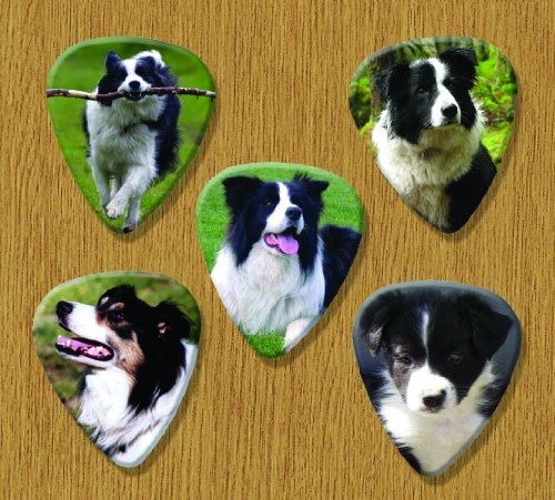 border-collie-dog-5-loose-guitar-picks