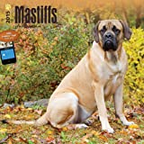 BT Mastiffs 2015 Wall