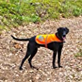 SafetyPUP XD Dog Reflective Vest. Sizes To Fit Dogs 22 lbs To 100 lbs. Blaze Orange Hi Vis Dog Vest Protects Dogs From Cars & Hunting Accidents.