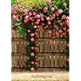 Pink Climbing Rose All Season Flower Seeds