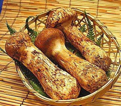 国産 松茸 長野県産 500g入 まつたけ 日本国産 スキヤキ 炊き込み マツタケ