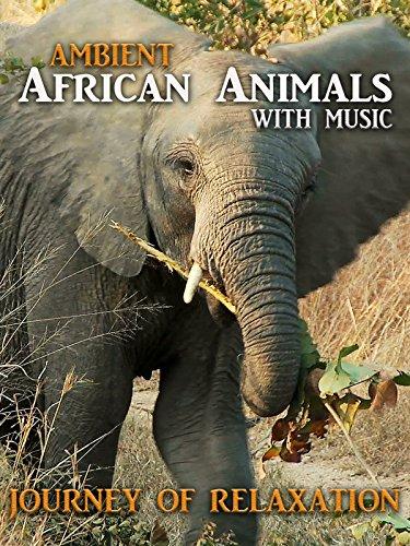 Ambient Africa Animals