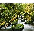 Komar DM909 Ideal Decor Green Canyon Cascades 4-Panel Wall Mural