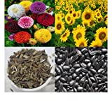 alkarty zinnia and sunflower seed