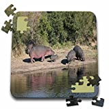 Angelique Cajam Safari Animals - South African Hippopotami near the water hole adults and calves - 10x10 Inch Puzzle (pzl_20107_2)