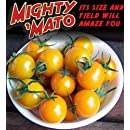 Mighty 'Mato Grafted Super Sweet Sun Sugar Tomato Plant -Easy to Grow/More Fruit