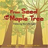 img - for From Seed to Maple Tree: Following the Life Cycle (Amazing Science: Life Cycles) book / textbook / text book