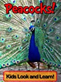 Peacocks! Learn About Peacocks and Enjoy Colorful Pictures - Look and Learn! (50+ Photos of Peacocks)