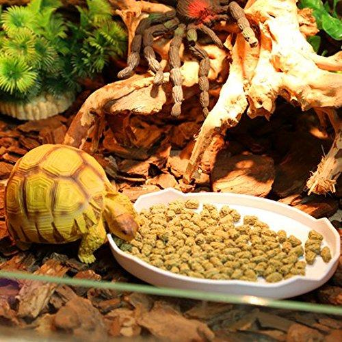 ThinkPet Plastic Reptile Food and Water Bowl Terrarium Dish Aquarium ...