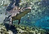 Image de Wildes Florida - National Geographic