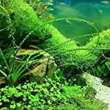 Hot Sale! Newest 1000 Pcs pet fish aquarium grass seeds (Mixed), water aquatic plant seed