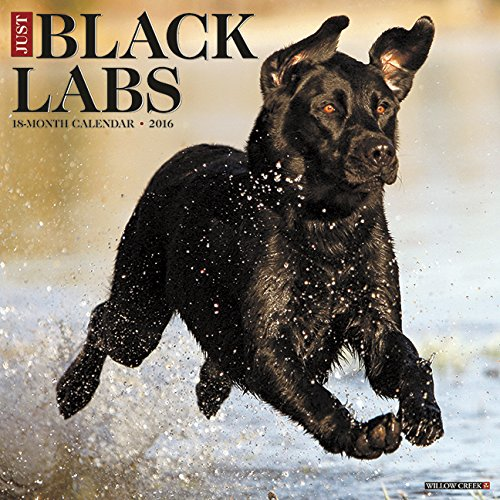 2016 Just Black Labs Wall Calendar