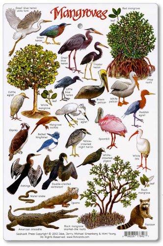 Mangroves Environment Identification Card