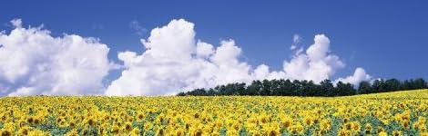 PT-023 ひまわりの丘/北竜町/北海道 「北の大地から - 花咲く丘」ポストカード