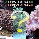 (海水魚 サンゴ)おまかせソフト2種+ハード1種セット Sサイズ 本州・四国限定[生体]