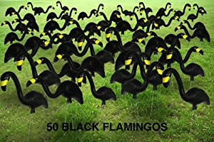 Garden Plast Black Flamingos, 50-Pack