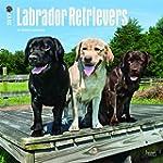 Labrador Retrievers 2017 - 18-Monatsk...