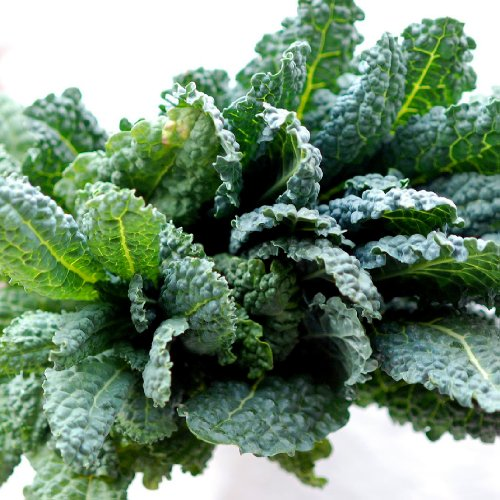 how to grow kale from seed video