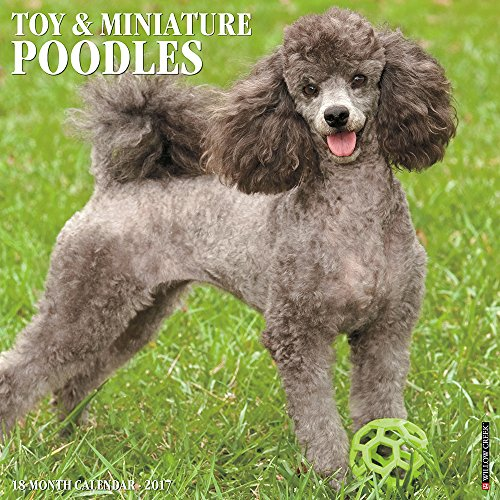 Just Toy & Miniature Poodles 2017 Wall Calendar (Dog Breed Calendars)