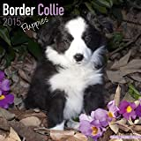 Avonside Publishing Border Collie Puppies