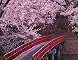 Cherry Blossom on a Bridge - Premium Quality Mouse Mat