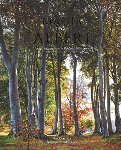 la-magia-degli-alberi-viaggio-fotografico-tra-i-giganti-della-terra