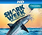 Shark Bites: Adventures in Shark Week [HD]
