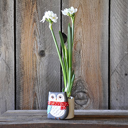 Paperwhite in a Grey Winter Owl Container - Adorable Gift - Ships Free!! (Forcing Bulbs Containers compare prices)
