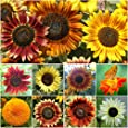 "250 Seeds, Sunflower ""Crazy Mix"" (10+ Varieties) Seeds by Seed Needs"
