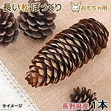 長野県産 長い松ぼっくり 1個 BISTRO USAYAMA 小動物のおもちゃ パインコーン 国産 無添加 無着色