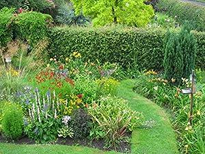 Wallmonkeys wm104922 english garden peel and stick wall for English garden wall mural