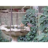 Birds Choice Stainless Steel Pedastal Bird Bath Dripper
