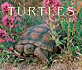 img - for Turtles 2017 book / textbook / text book