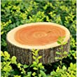 COOLBUY PARK 2 kinds of Stump Shaped Decorative Pillows Cute Round Woods Gra...
