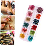 Gatton Premium New Pro 12 Colors/Set Nail Art Real Dried Flowers DIY Manicure Tool Tips Decor | Style MNCRSET-301122360