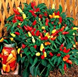 Sweet Pickle Pepper 20 Seeds -The Christmas Tree Pepper